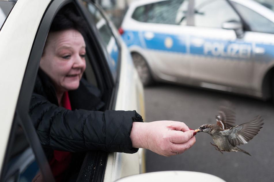 Eine Taxifahrerin vertreibt sich ihre Wartezeit mit dem Verfüttern kleiner Keksstücke an Spatzen vor dem Hauptbahnhof in Berlin.
