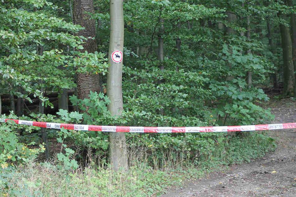 In diesem Wald bei Vlotho wurde die Leiche verscharrt.