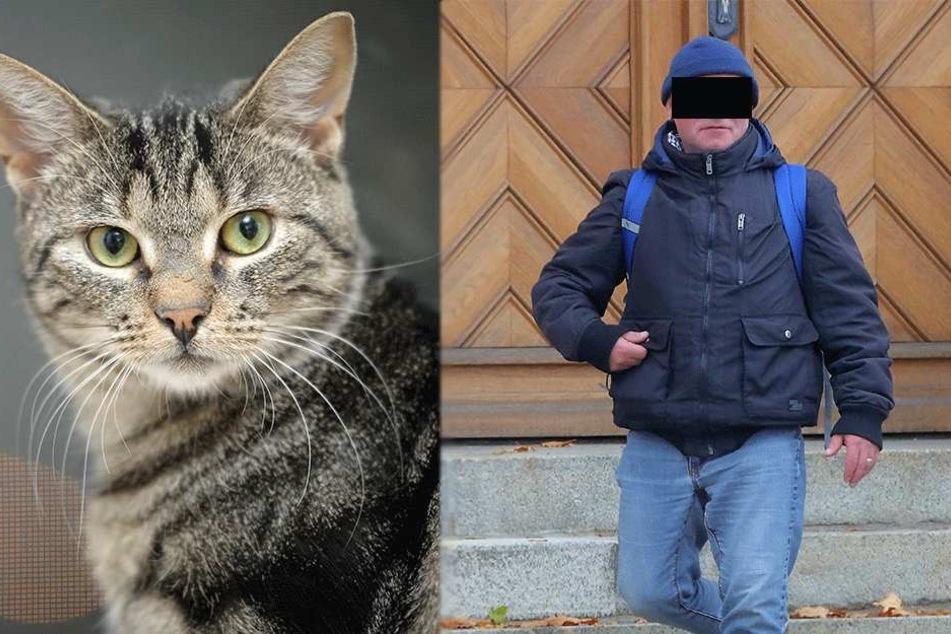 Vom vierten Stock! Tierpfleger warf seine Katze vom Balkon in den Tod