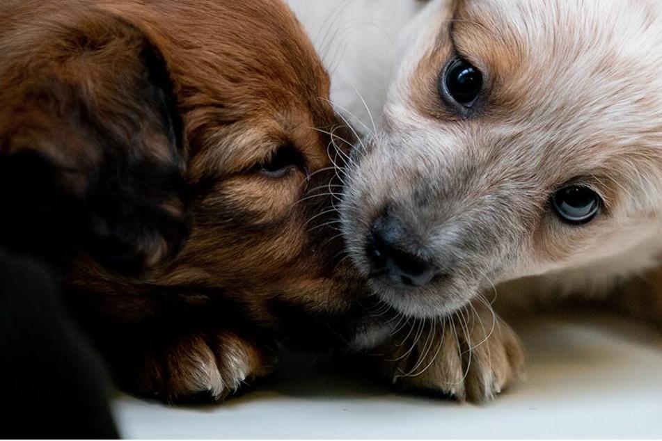 Frau hielt mehr als 100 Hunde in einer Bruchbude - Knast!