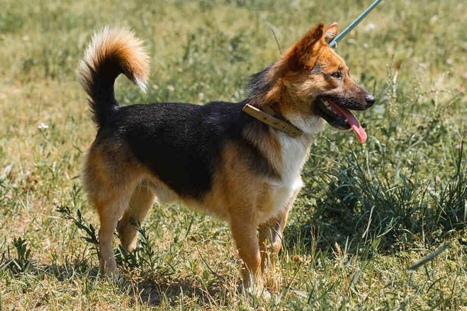 Leinen und Halsbänder sind für Hunde ok, Kabelbinder jedoch gesundheitsgefährdend.