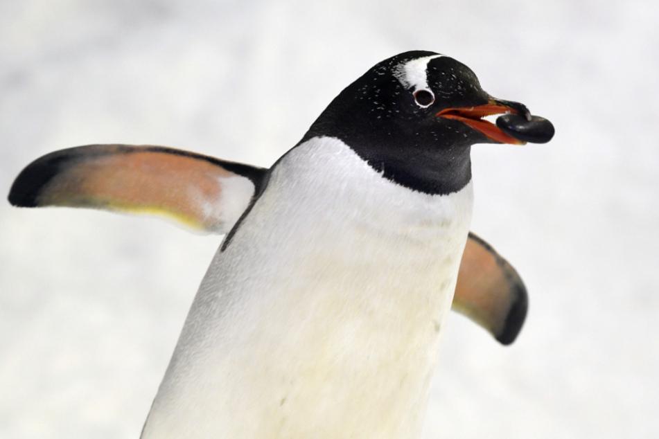 """Der """"Pinguin"""" soll sich auf dem Dach der Anruferin herumgetrieben haben (Symbolfoto)."""