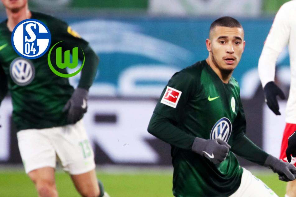 Schalke 04 schnappt sich Rechtsverteidiger vom VfL Wolfsburg!