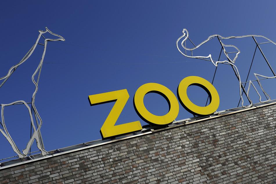 Der Kölner Zoo setzt sich, wie viele andere Organisationen, für die Betroffenen Familien ein. Bis zum Ende der Herbstferien können die Tickets eingelöst werden.