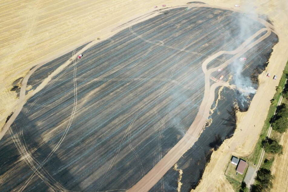 10 Hektar brannten auf dem Feld ab.