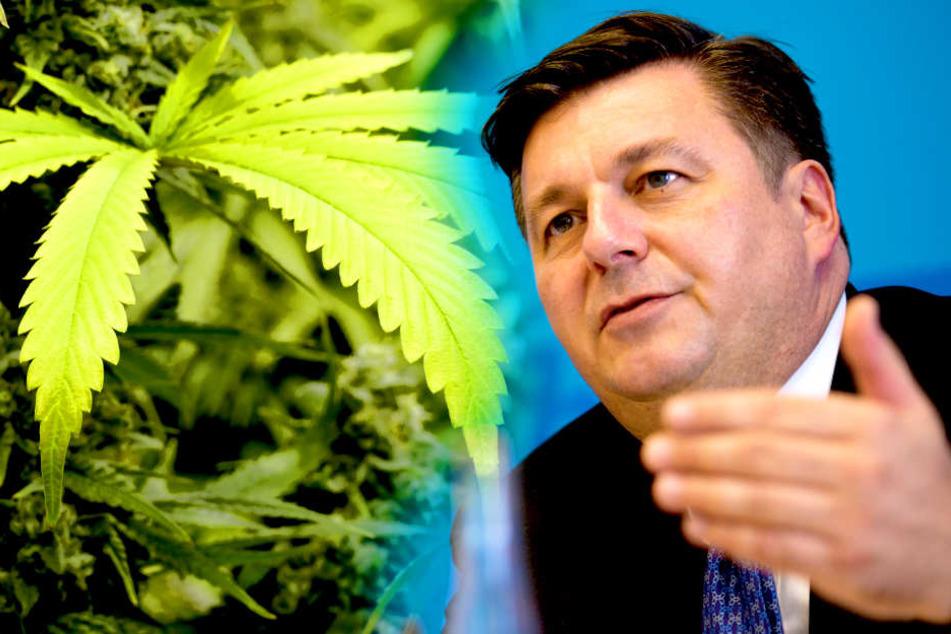 Jetzt doch! Berliner Innensenator für Legalisierung von Cannabis