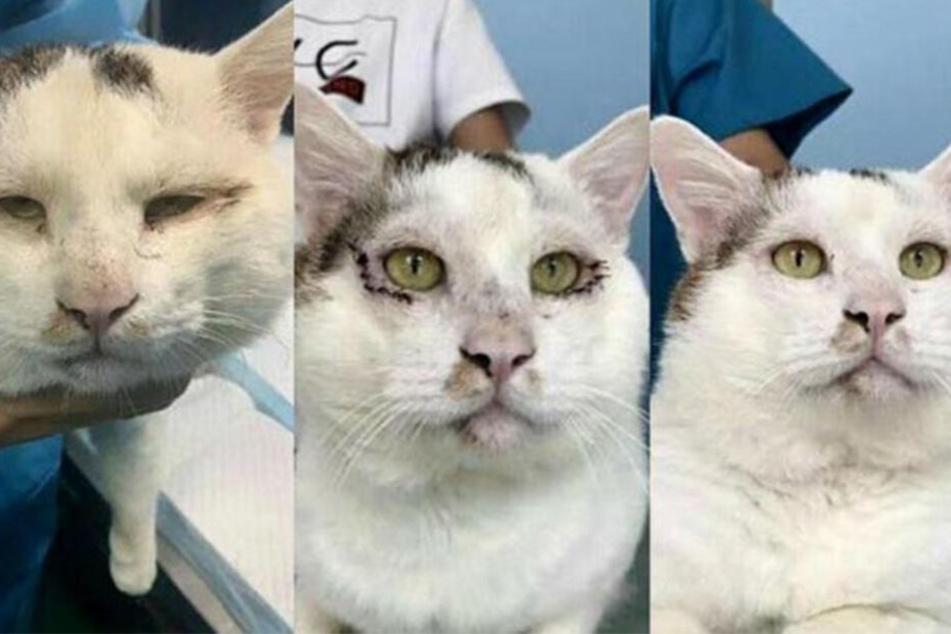 Katze muss zur Beauty-OP, weil ihre Halterin sie hässlich findet