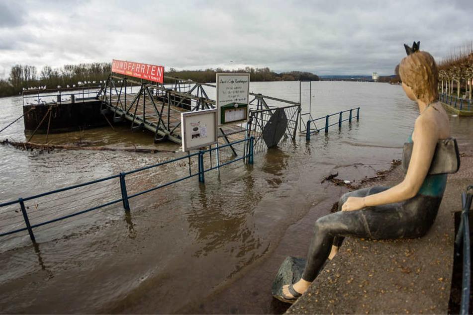 Hochwasserlage spitzt sich zu: Rhein tritt über die Ufer!