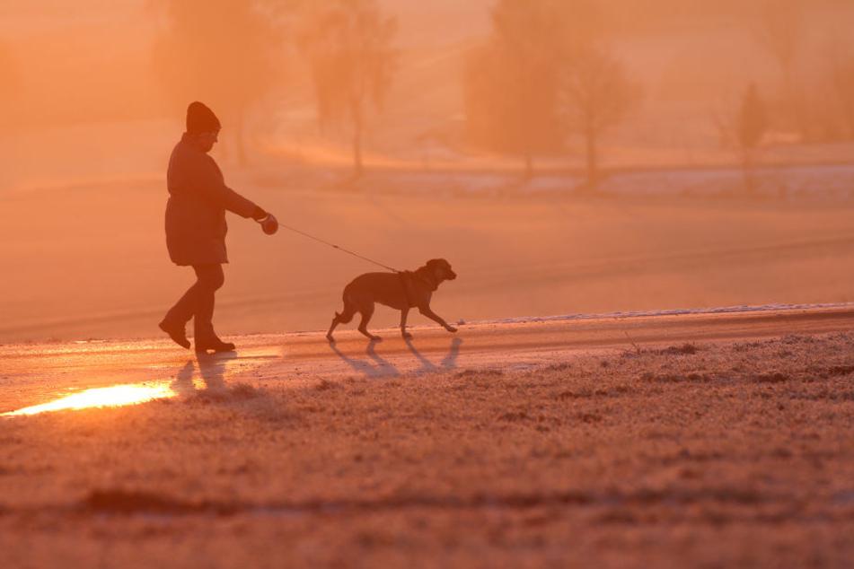 Du solltest umgehend einen Tierarzt aufsuchen, wenn bei deinem Hund Beschweren auftreten.
