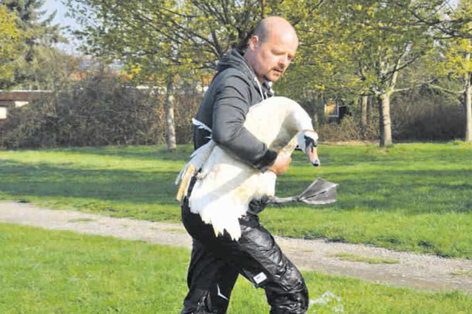 Angelschnur hatte Bein abgeschnürt: Schwan schwimmt mit Prothese