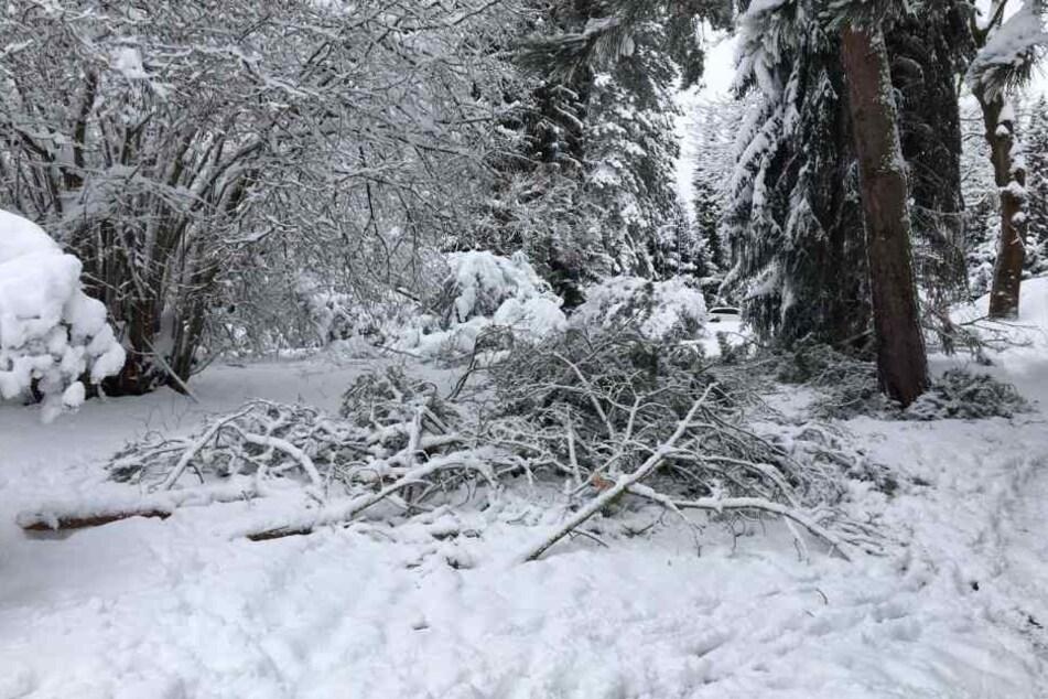 Schneebruch auch im Park am Pelzmühlenteich.