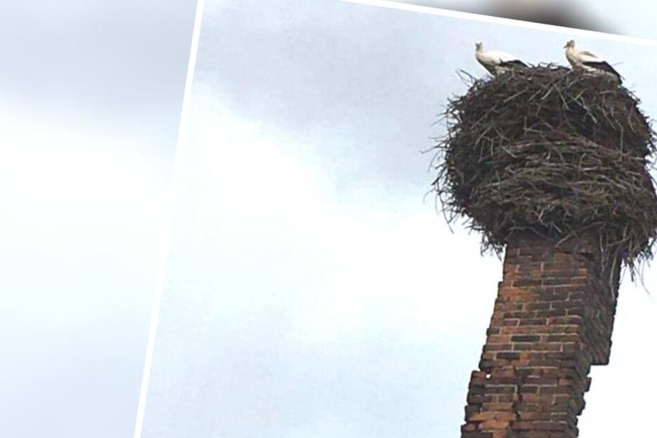 Eilenburgs Bürger sorgen sich aktuell um Storchenfamilie Adebar. Ihr Nest auf einem Schornstein droht abzustürzen.