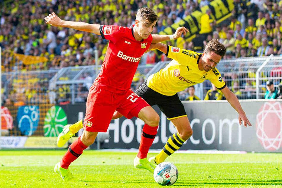 Duell zukünftiger Mannschaftskollegen? Kai Havertz (l.) bei Leverkusens 0:4-Pleite in Dortmund im Duell mit BVB-Sechser Thomas Delaney.