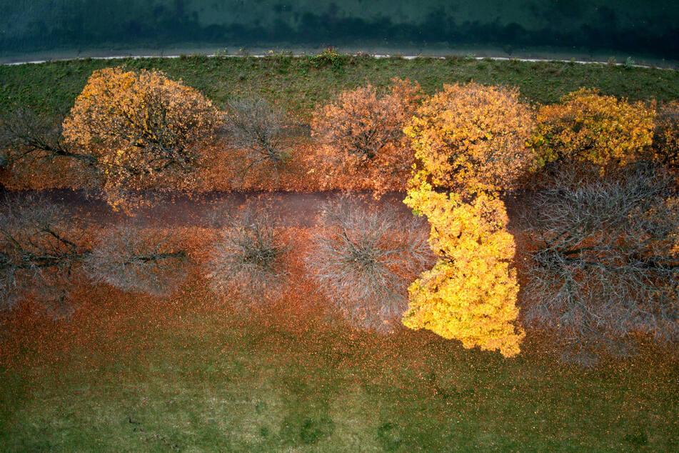 Herbst-Phänomen beim Wetter in Köln: Wo das Laub fällt und wo nicht!