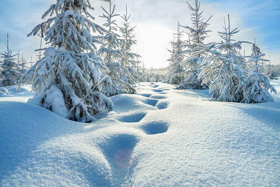 In einigen Regionen Deutschlands könnt Ihr Euch auf so eine herrliche Winterlandschaft freuen.