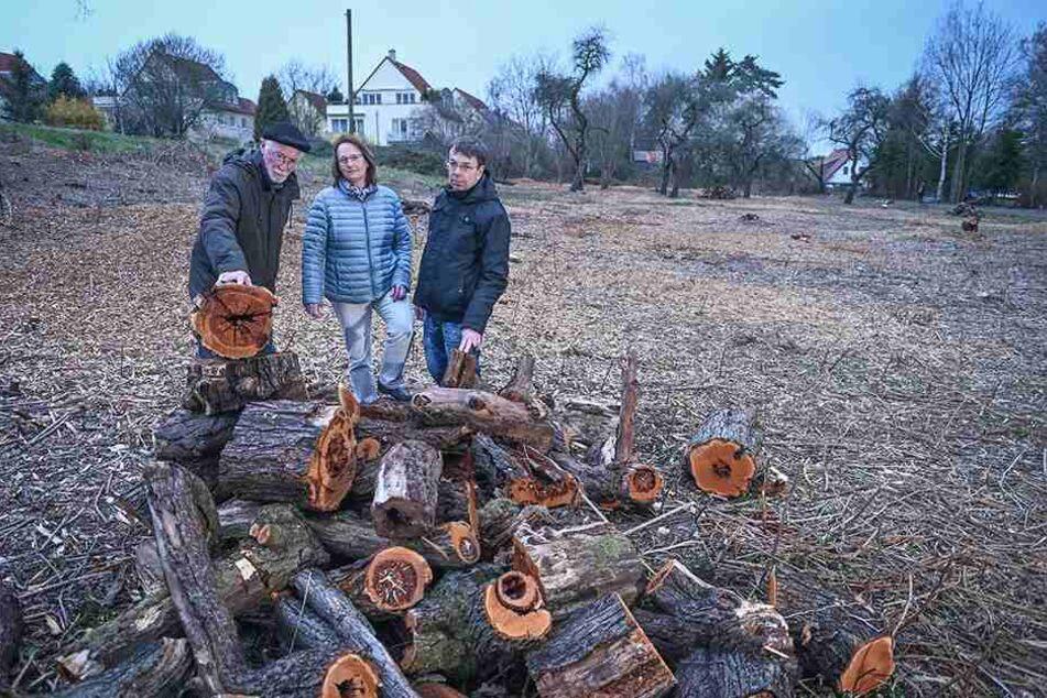 Christoph Hille (66, v.l.), Kathrin Schiffel (50) und Jens Rösler (53) wehren sich gegen das Baum-Massaker.