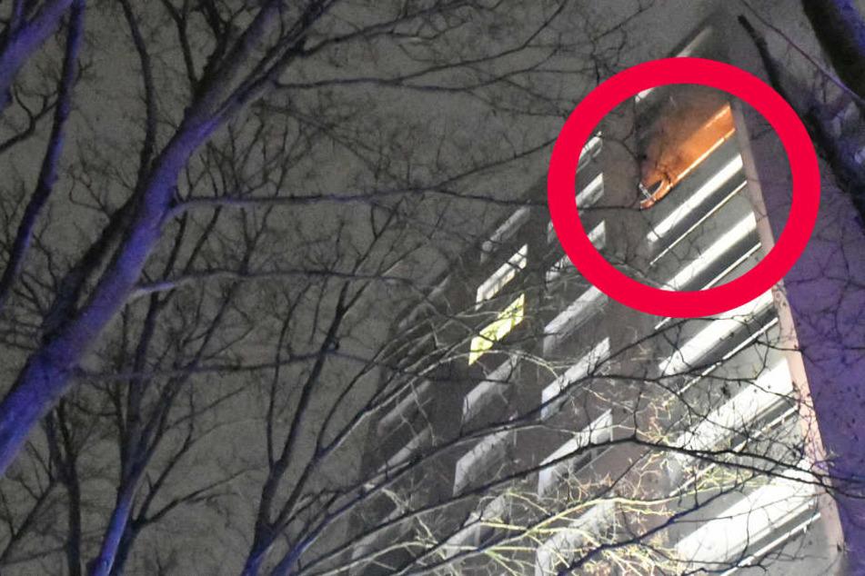 Der rote Kreis markiert den brennenden Balkon.