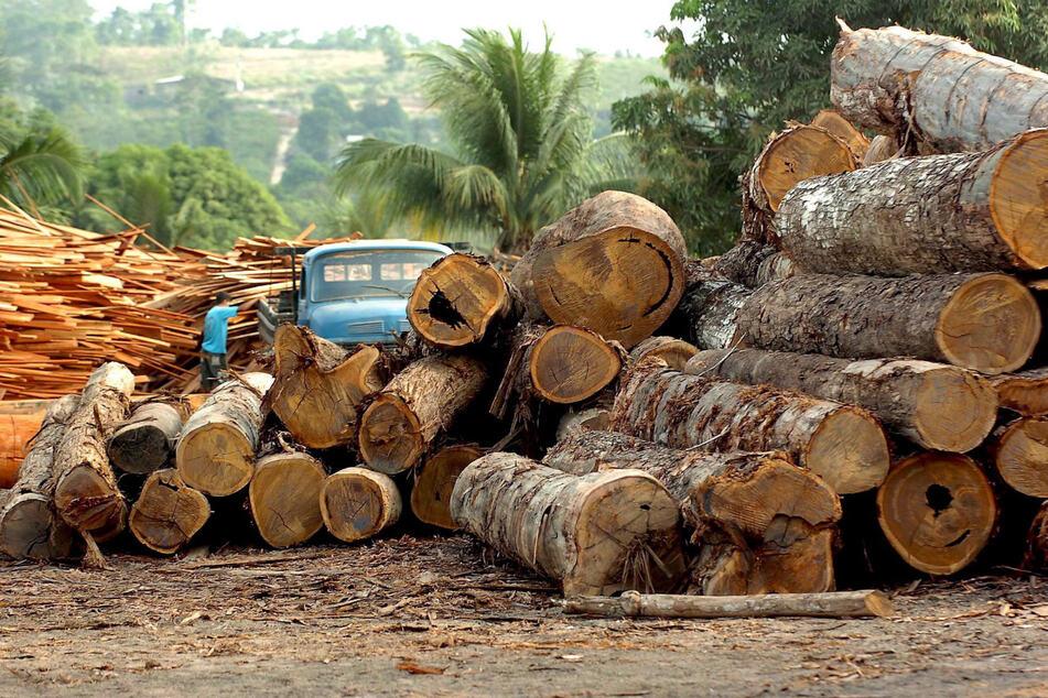 """""""Abholzung außer Kontrolle"""": Regenwald in Brasilien weiter zerstört"""
