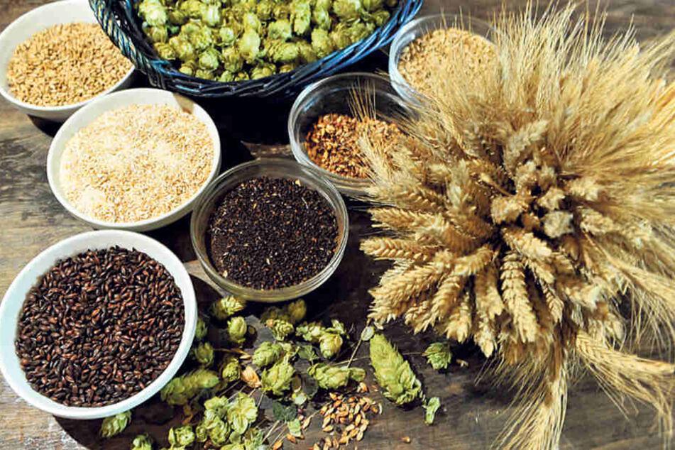 """Diese natürlichen Zutaten verwendet die """"Stonewood""""-Brauerei für verschiedene  Biere, darunter Gerste (r.) und Hopfen (o.)."""