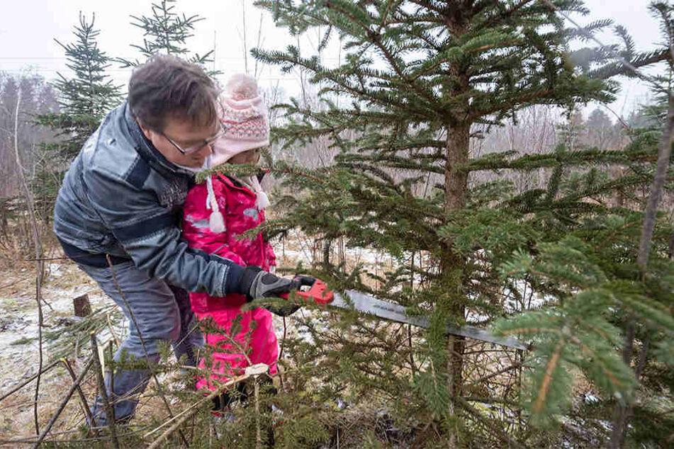 Selbst ist der Mann - doch er muss nicht alleine ran: Der Chemnitzer Tino Pinnow (43) hatte Tochter Clara (5) als Verstärkung dabei.
