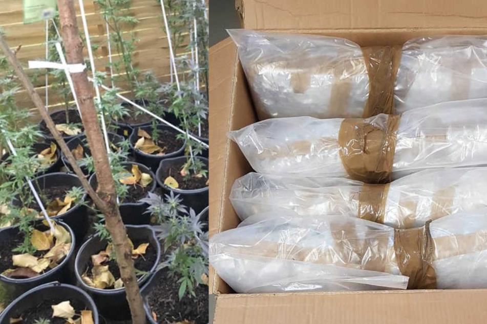 Eine Marihuana-Plantage und mehrere Säcke Rauschgift wurden sicher gestellt.