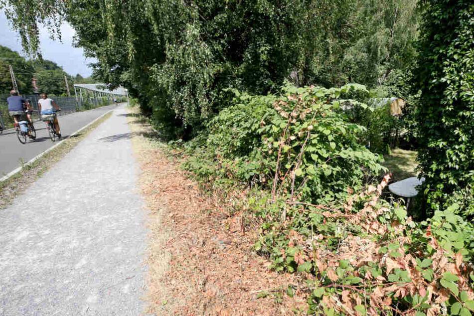 In der Nähe dieses Gebüsches soll eine junge Frau am Freitagabend von einer Gruppe Jugendlicher überfallen und sexuell missbraucht worden sein.