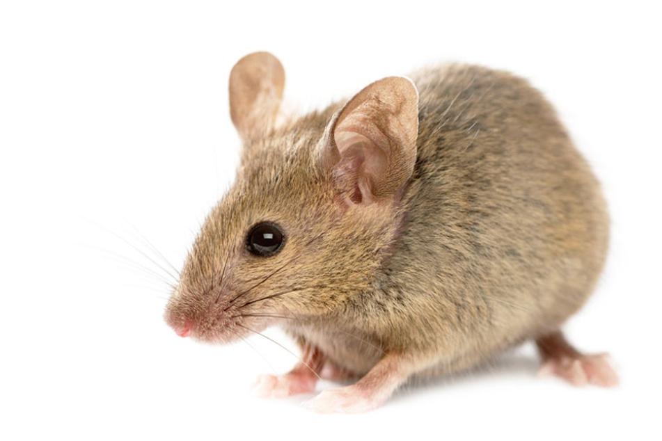 Ein Kellner soll eine kleine Maus vor den Augen der Gäste zertreten haben.