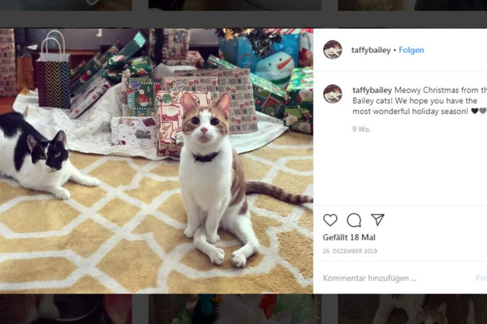 Taffy auf Instagram.