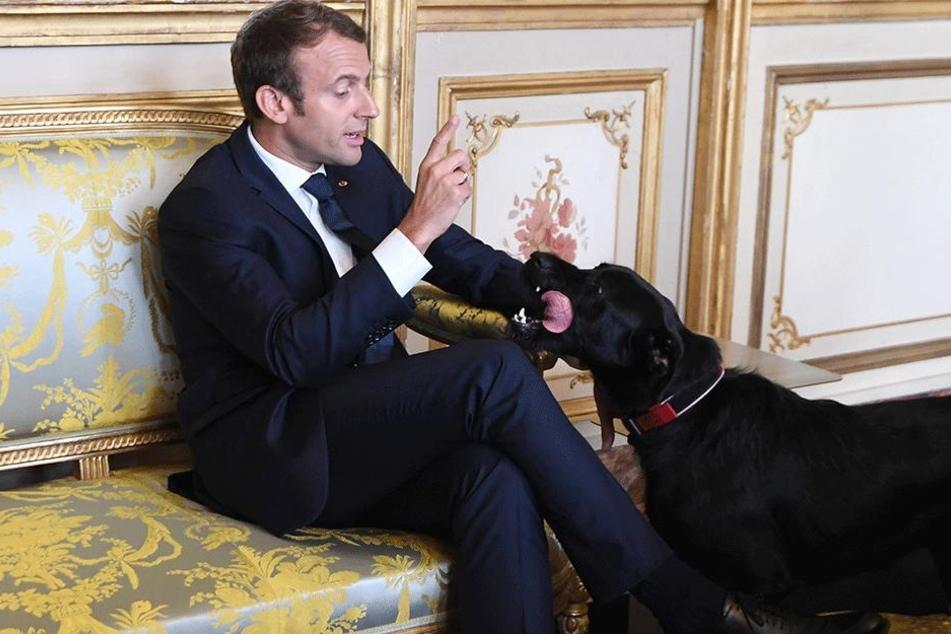 Wehe Freundchen, das passiert noch mal... Monsieur le President liest Nemo die Leviten.