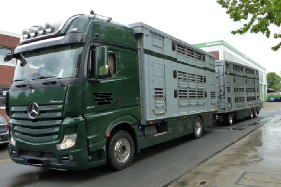 Viel zu viele Schweine: Polizei stoppt überfüllten Tiertransporter