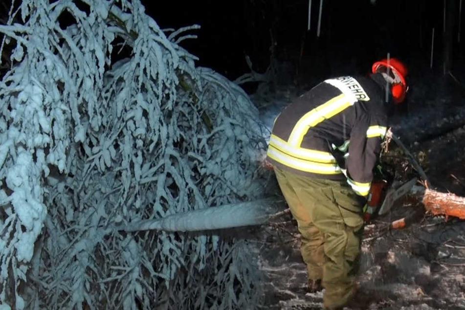 Lebensgefahr in den Wäldern! Schneemassen lassen Bäume reihenweise umstürzen