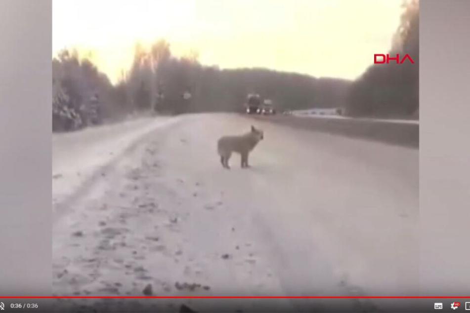 Ein YouTube-Video zeigt den Hund, dessen Herz gebrochen zu sein scheint.