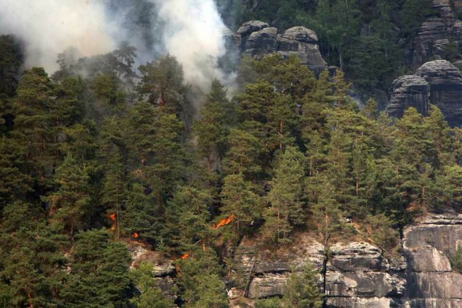 Stundenlang kämpfte die Feuerwehr gegen den Waldbrand.