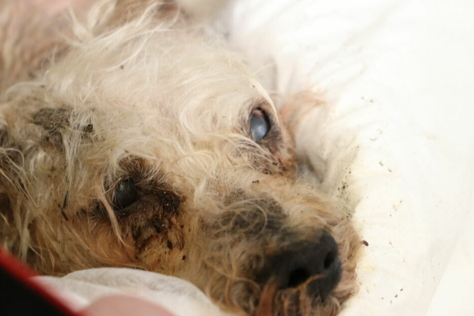 Der Hund starb, konnte nicht mehr gerettet werden.