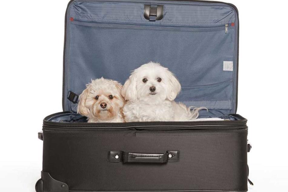 In dem Koffer des Mannes war nur ein Hund, doch der wurde darin in die Klinik zu seinem todkranken Frauchen geschmuggelt.