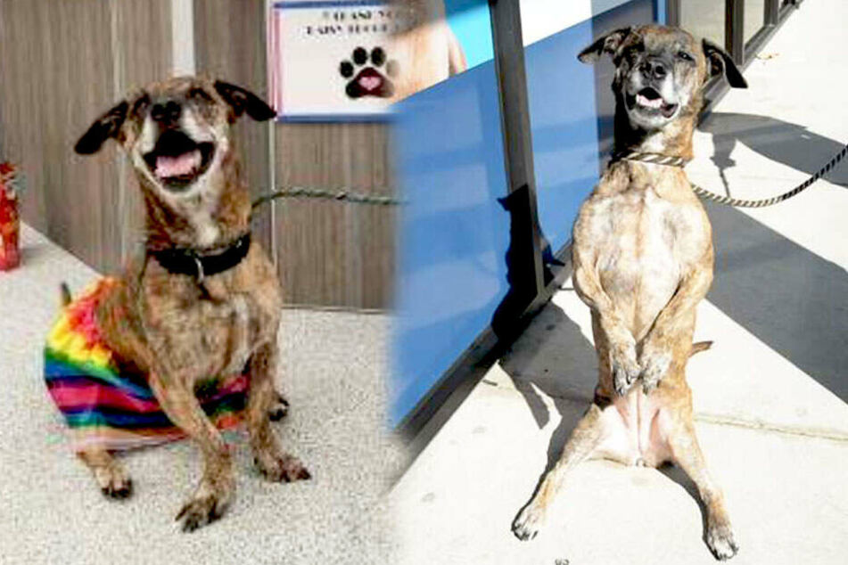 Diese gerettete Hündin überrascht ihre Tierpfleger mit einem süßem Trick!