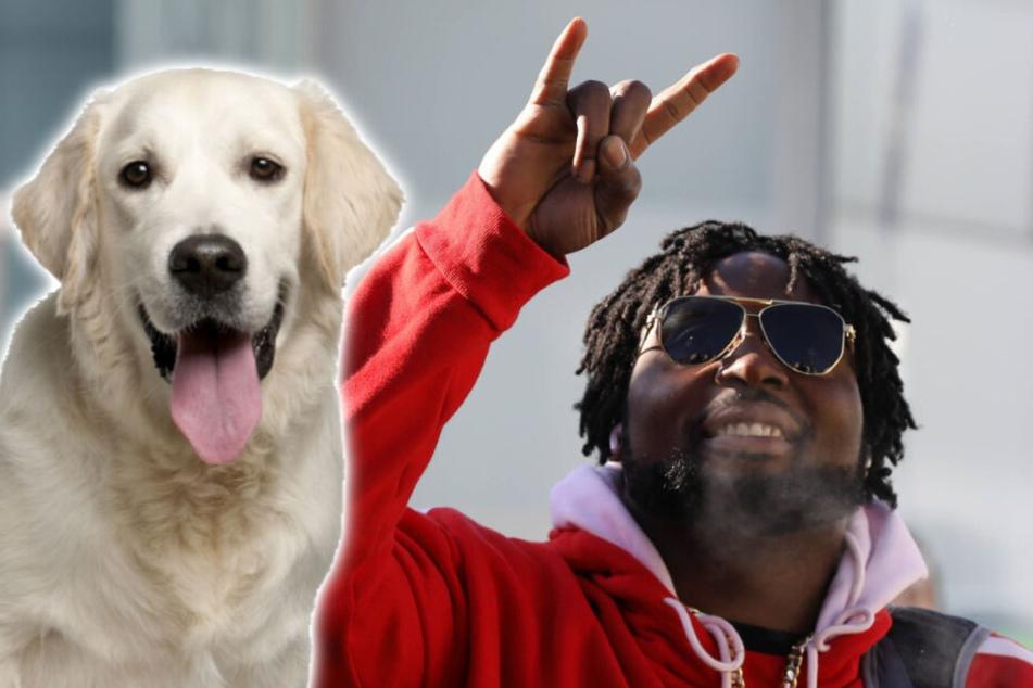 Mit dieser tollen Aktion setzt sich ein Super-Bowl-Sieger für Hunde ein