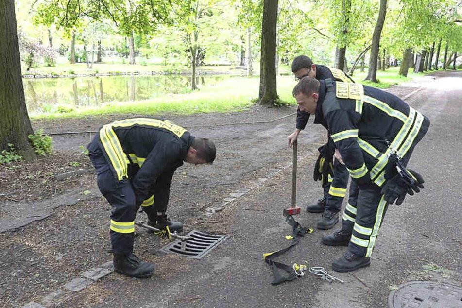 Die Kameraden der Feuerwehr Chemnitz hoben den Gully heraus und retteten das Küken.