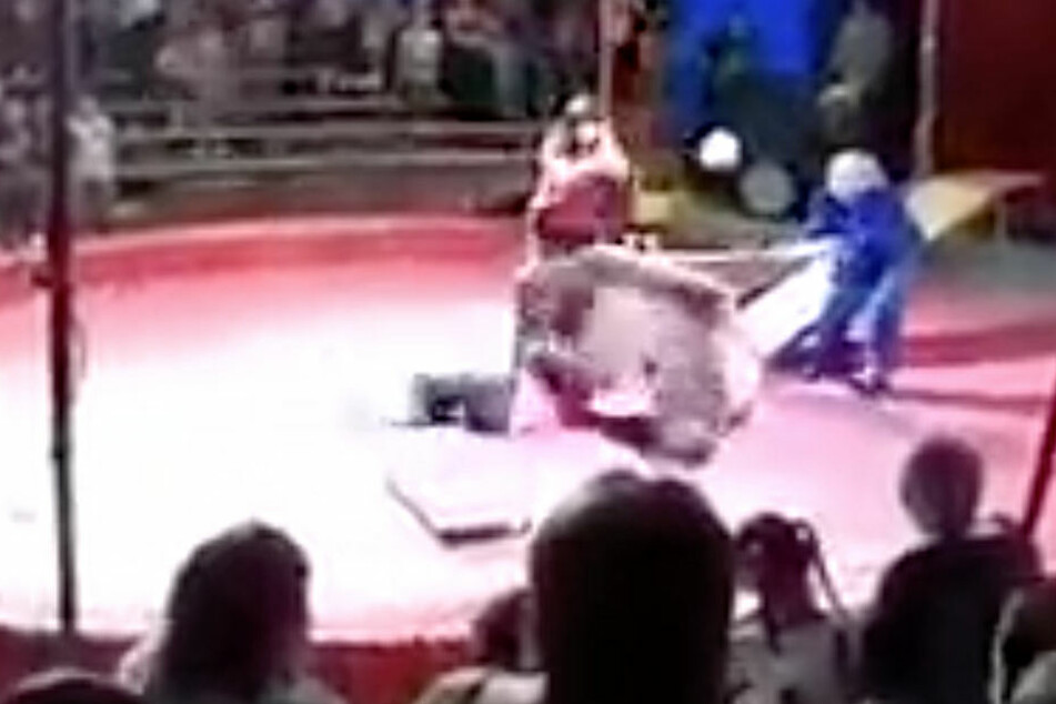 Schockierende Szenen: Bär rastet während Zirkus-Show aus