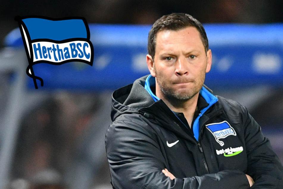 """Hertha-Coach Dardai läutet den Abstiegskampf ein: """"Jeder sieht, wo wir stehen"""""""