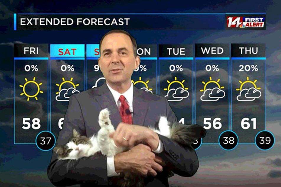 Meteorologe bekommt tierische Unterstützung bei Wetterbericht