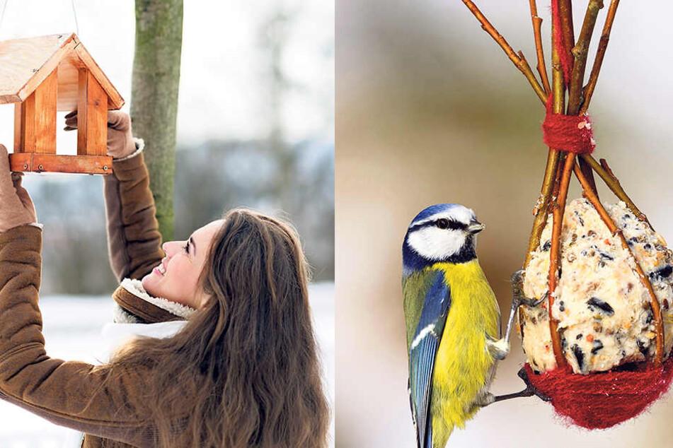 Ein Vogelhäuschen lockt die gefiederten Freunde in Scharen in winterliche Gärten.