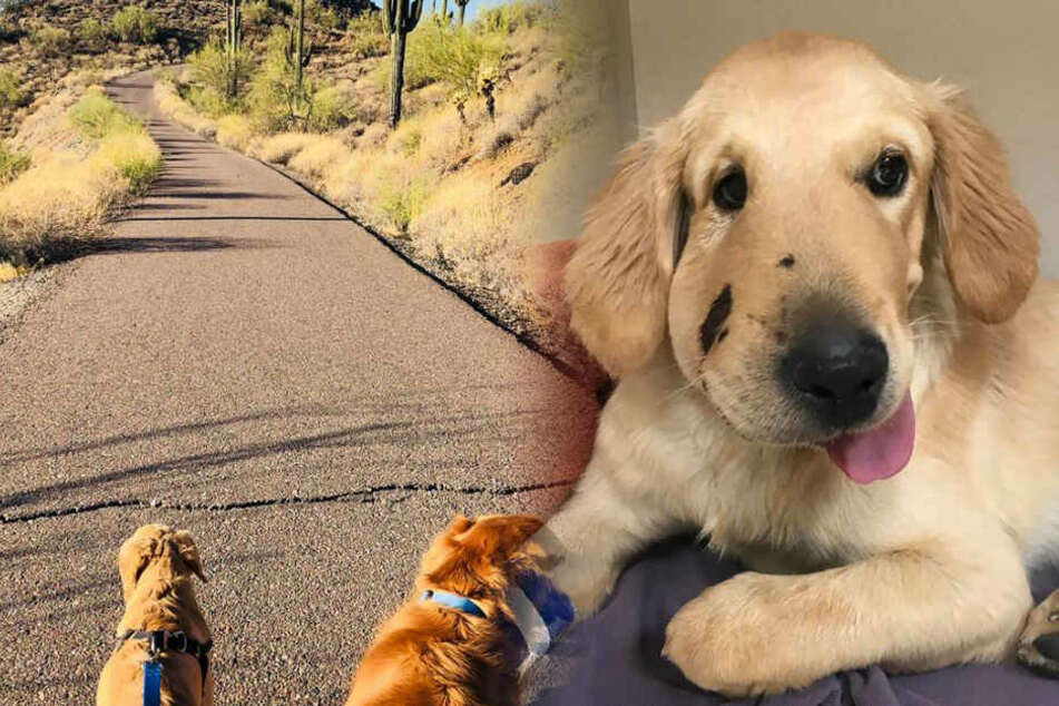 Hund rettet Frauchen und bringt sich selbst in Lebensgefahr