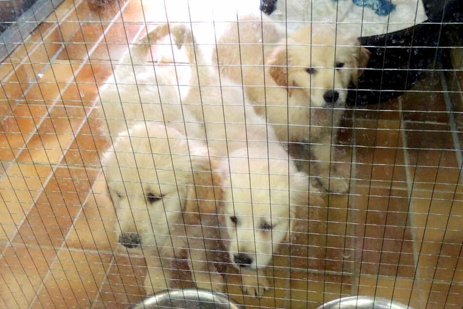 Die drei Hunde befinden sich nun im Veterinäramt. (Symbolbild)