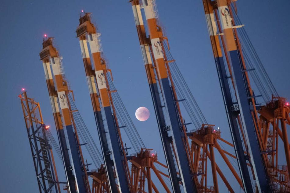 Und sie wurden belohnt: Der Mond ging über den Kränen des Containerterminals Eurogate auf.