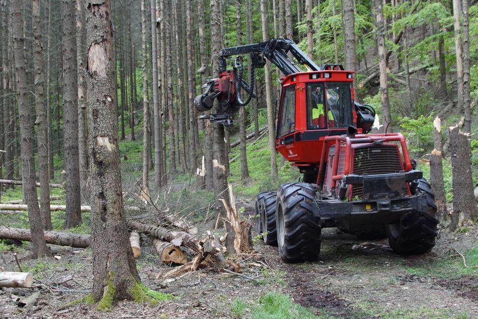 Mit Harvester und Kettensäge: Im Nationalpark machen sie die (gesperrten) Wege frei