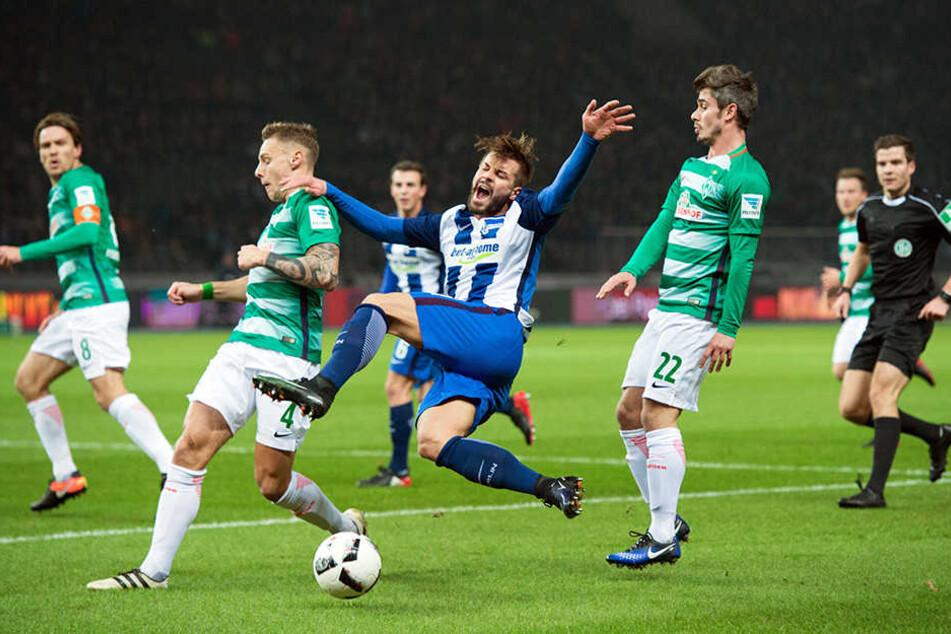 Berlins Marvin Plattenhardt im Dreikampf. Gegen Bremen setzte es in der vergangenen Saison eine bittere 1:0-Niederlage vor heimischer Kulisse.