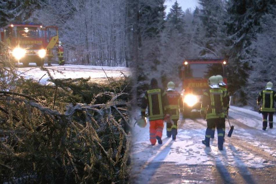 Winterchaos in Sachsen: Bäume krachen auf befahrene Straße!