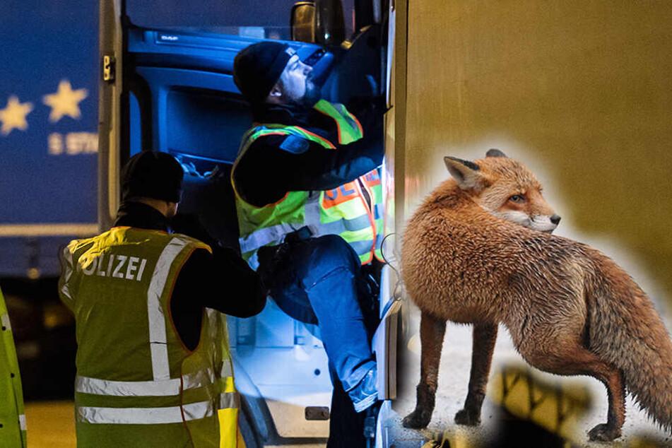 Polizei-Kontrolle auf Rastplatz bei Görlitz: Fuchs greift Polizist an