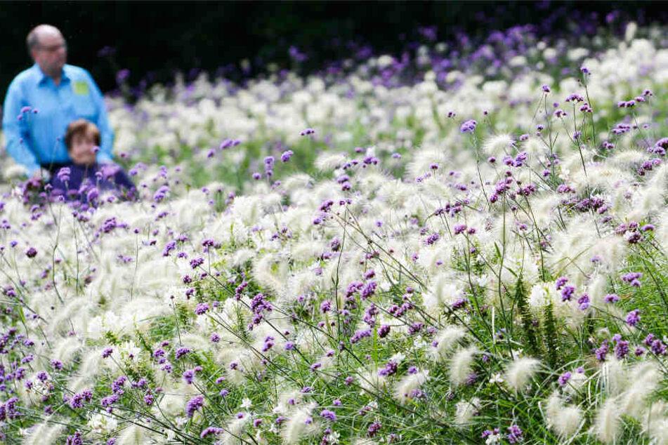 Überbordende Blütenpracht wie bei der Gartenschau 2014 in Gießen erwartet auch die Besucher in Fulda.